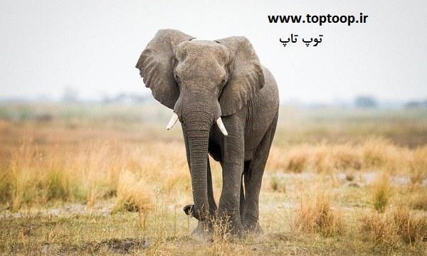 تعبیر خواب فیل سفید در خانه