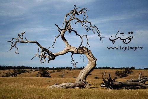 تعبیر خواب درختان خشکیده