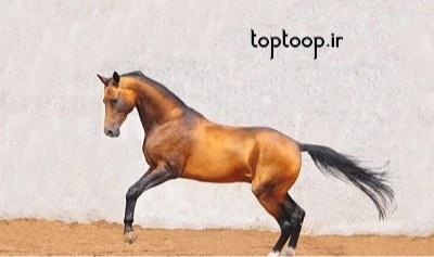 تعبیر خواب حمله اسب های وحشی با رنگ های مختلف