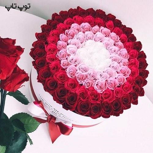 عکس زیباترین گل رز مناسب پروفایلم در تلگرام + آلبوم تصاویر