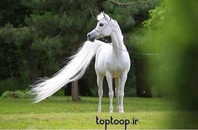 تعبیر خواب حمله اسب سفید وحشی