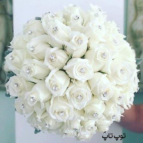 عکس گل رز سفید برای پروفایل