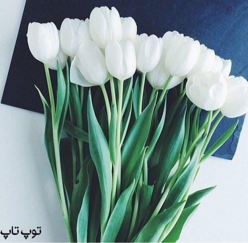 تصاویر گلهای بهاری زیبا برای پروفایل 2019 جدید