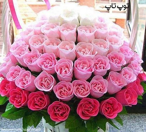 عکس گل رز در رنگ های مختلف برای پروفایل
