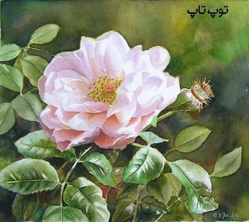 تصاویر گلهای نقاشی شده