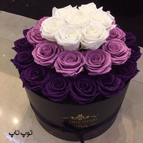 تصاویر گلهای رز با رنگ صورتی و سفید برای پروفایل