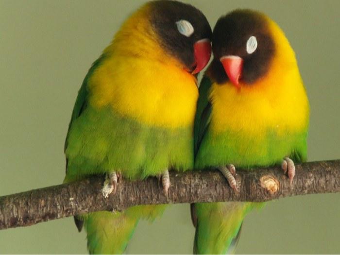 تعبیر خواب صحبت کردن با پرندگان