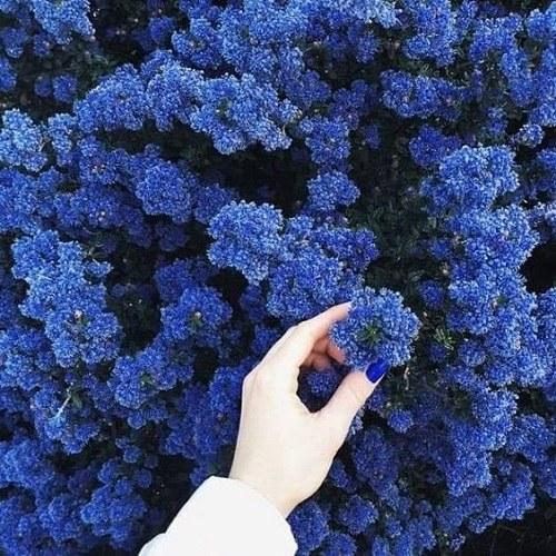 عکس منظره های رمانتیک با گلهای زیبا