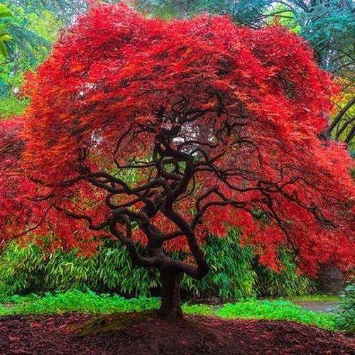 تصاویر درختان و مناظر قشنگ با کیفیت خوب مناسب چاپ یا پروفایل