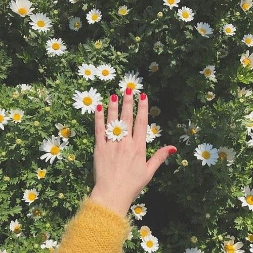 منظره بهاری عاشقانه + دست روی گل های نرگس و زرد رنگ زیبا
