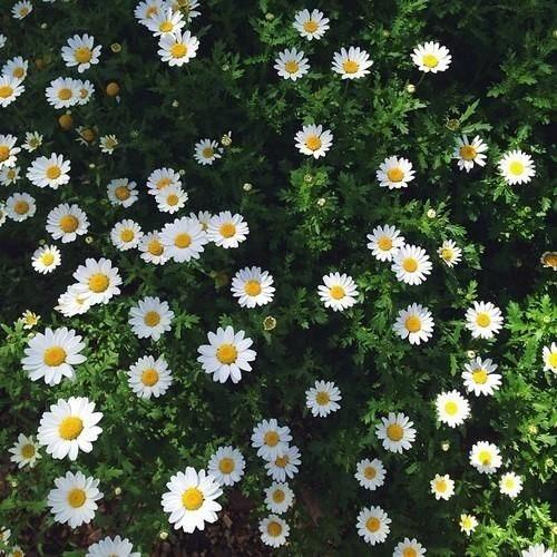 عکسهای گل و منظره برای پروفایل