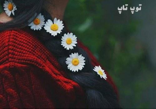 عکس پروفایل گل نرگس روی روسری