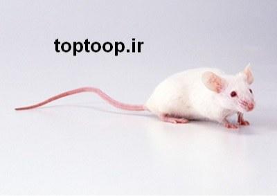 تعبیر خواب گاز گرفتن موش سفید