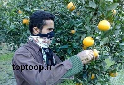 تعبیر خواب چیدن میوه از درخت پرتقال