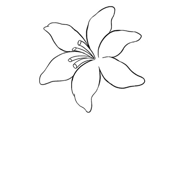 نقاشی گل سوسن مرحله دوازدهم