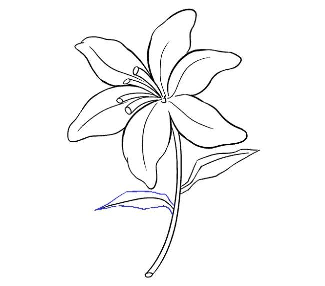 قدم به قدم نقاشی گل سوسن مرحله هجدهم