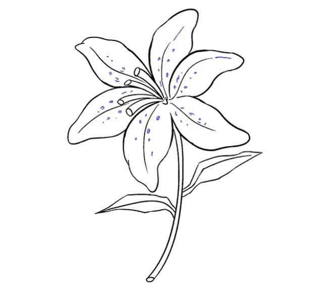 آموزش نقاشی گل سوسن برای کودکان مرحله نوزدهم