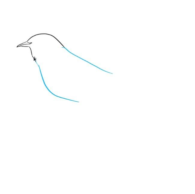 آموزش نقاشی مرغ مینا مرحله دوم