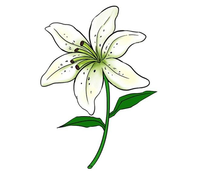 رنگ آمیزی نقاشی گل سوسن