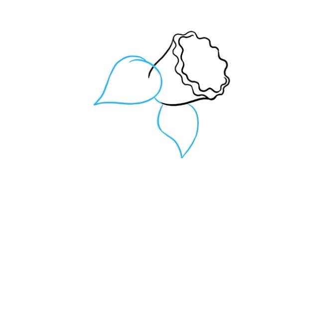 آموزش نقاشی گل نرگس مرحله سوم