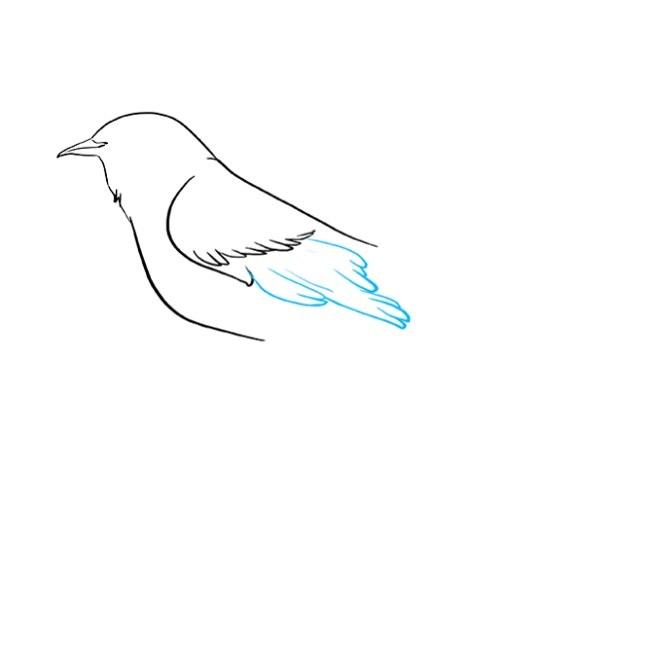 نقاشی کودکانه مرغ مینا مرحله چهارم