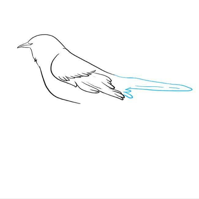 نقاشی مرغ مینا برای بچه ها مرحله پنجم