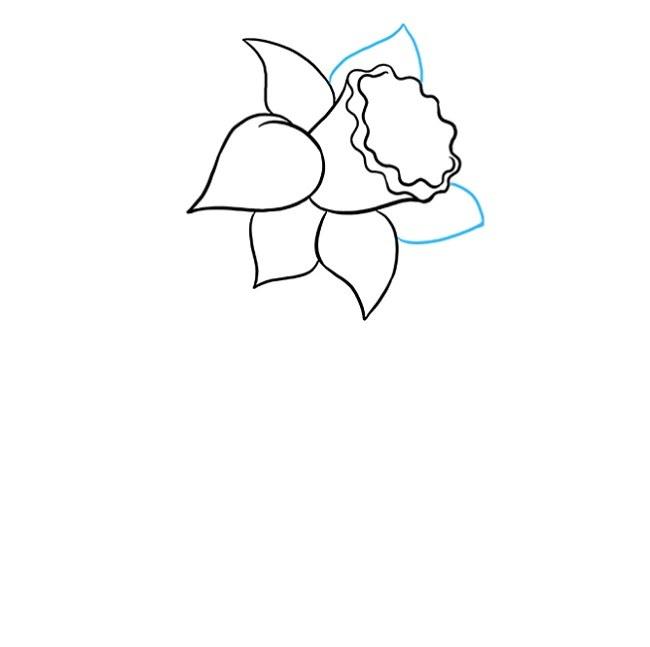 نقاشی گل نرگس برای بچه ها مرحله پنجم
