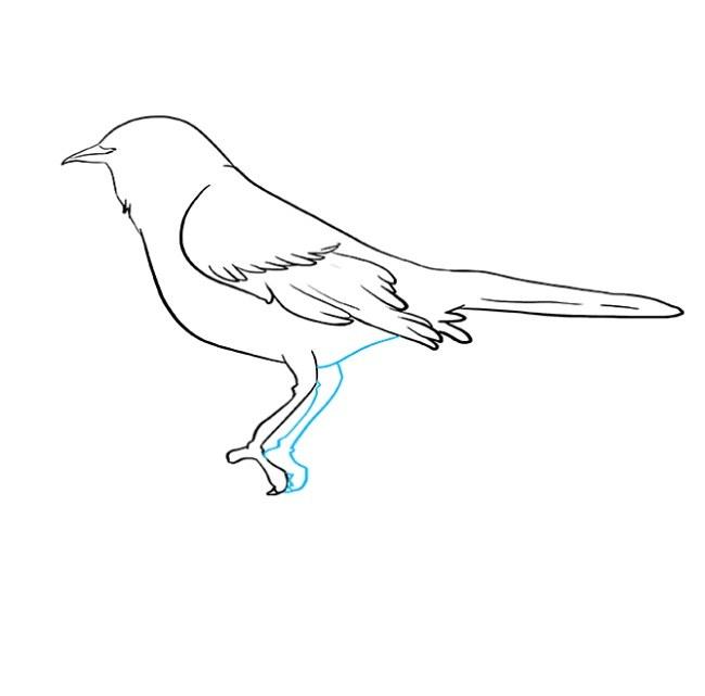 نقاشی کشیدن مرغ مینا مرحله هفتم