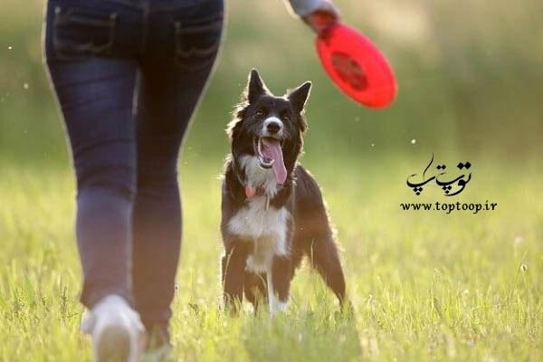 آموزش بازی با سگ