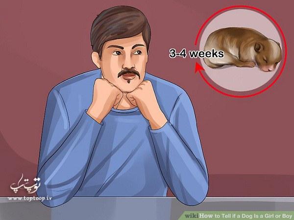 راه تشخیص جنسیت توله سگ