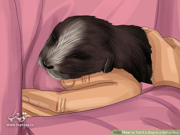 تشخیص جنسیت سگ نر یا ماده