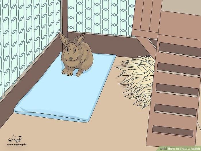 آموزش خرگوش برای استفاده از جعبه