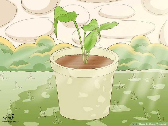 قرار دادن گلدان های زیر نور خورشید