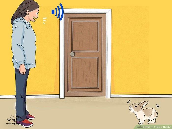 چگونه از پرخاشگری خرگوش جلوگیری کنیم