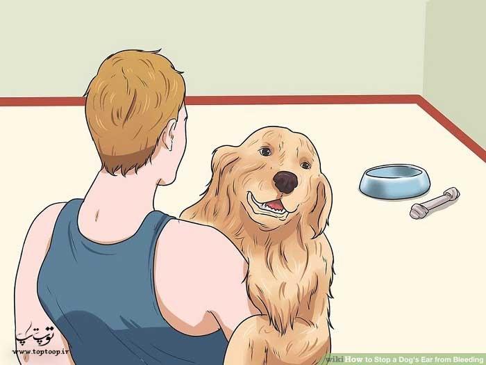 بردن سگ به محلی آرام