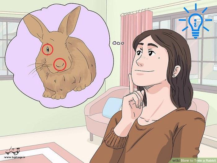 درک حس بینایی و بویایی خرگوش ها
