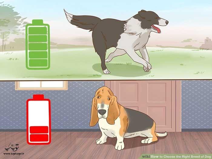 اندازه گیری سطح انرژی سگ