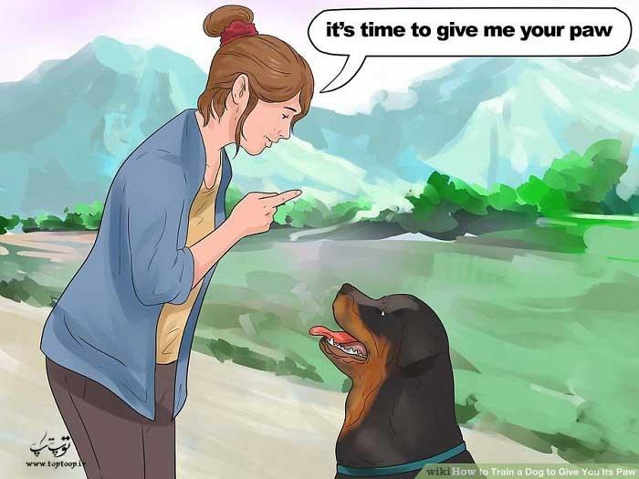 دستورات کلامی برای آموزش دست دادن سگ