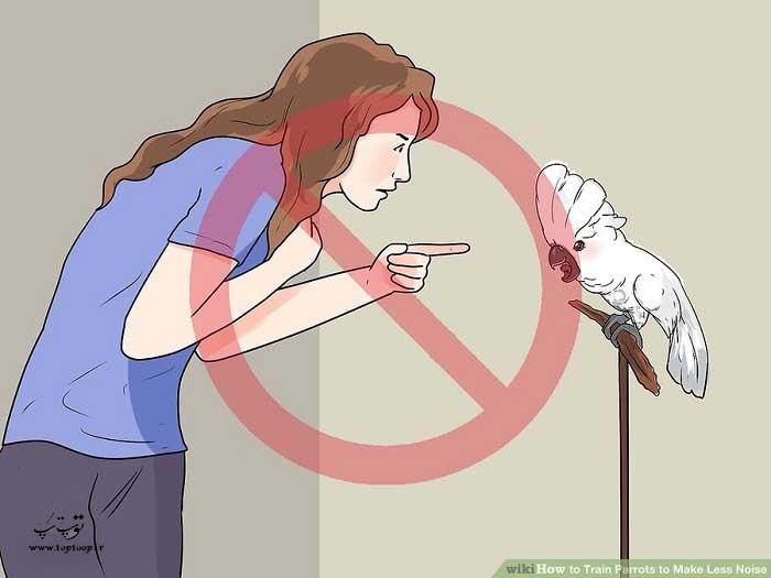 از فریاد کشیدن برای تنبیه پرنده استفاده نکنید