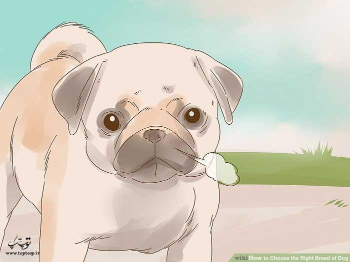 شناسایی امراض مرتبط با نژاد سگ