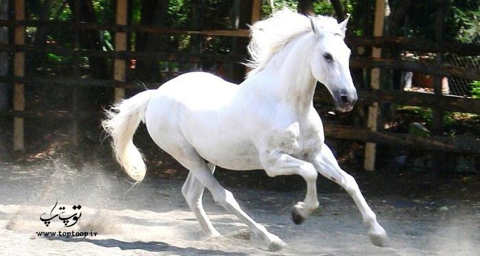 انتخاب اسم زیبا برای اسب ماده رنگ سفید