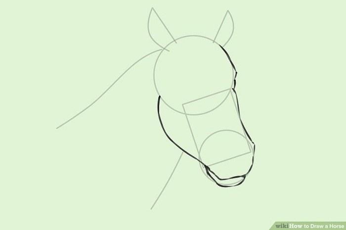 چگونه سر اسب را نقاشی کنیم