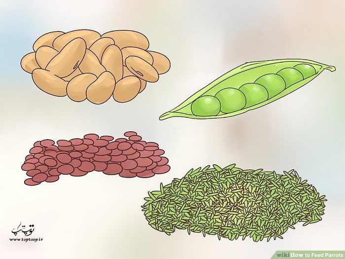 استفاده از حبوبات و غلات در رژیم غذایی طوطی