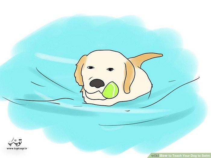 عادت دادن سگ به آب قبل شنا کردن