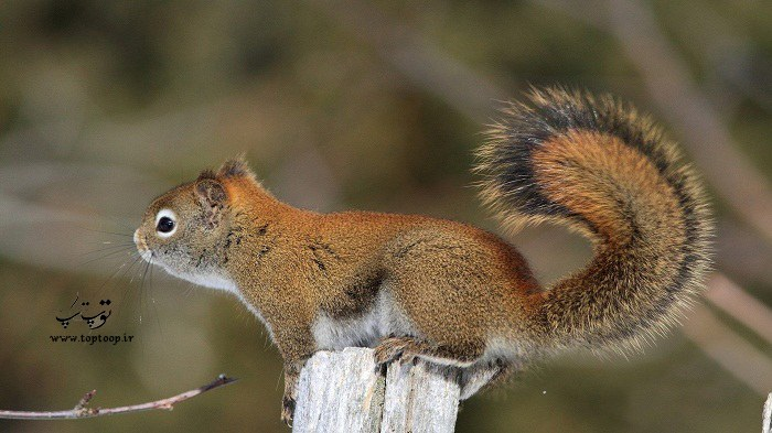اسم های شیک و خلاقانه برای سنجاب