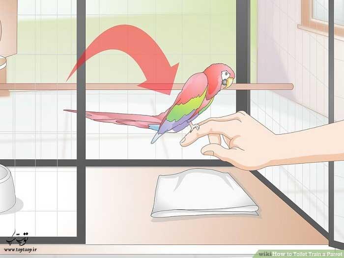 حرکت را به طوطی خود آموزش دهید