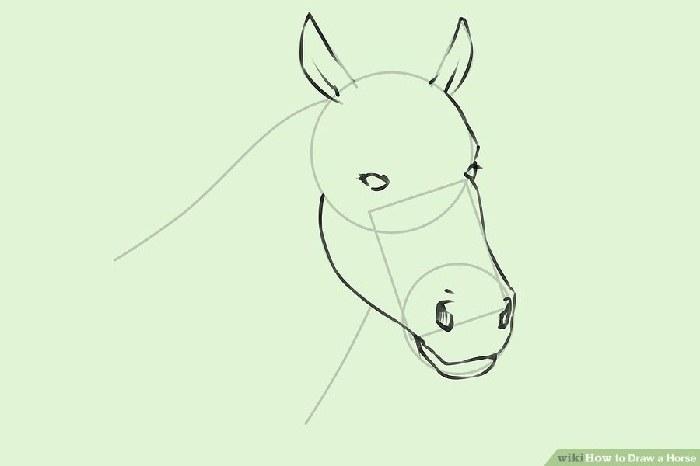 کشیدن سر اسب