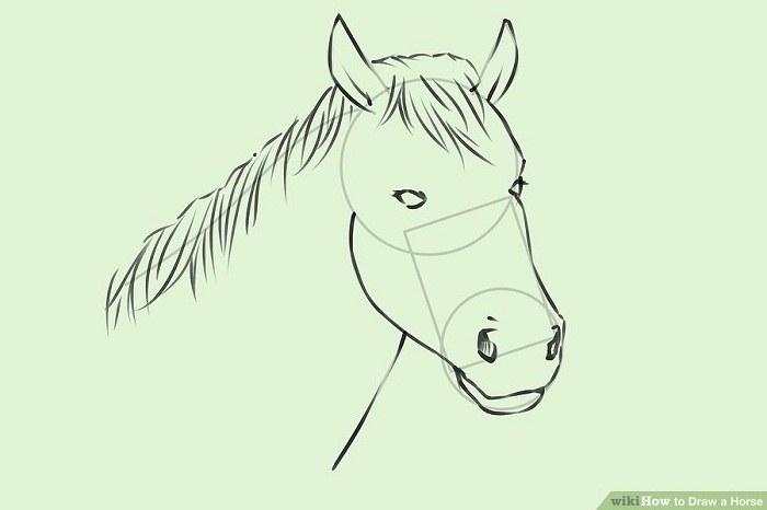 آموزش نقاشی واقعی از سر اسب