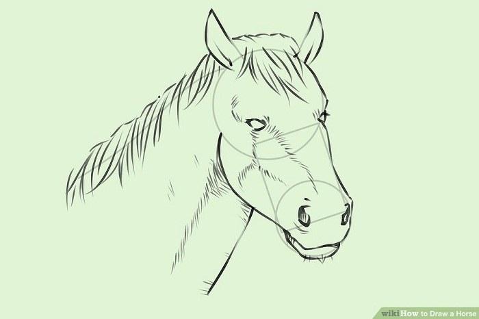 آموزش تصویری نقاشی از سر یک اسب