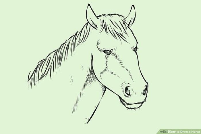آموزش طراحی اسب
